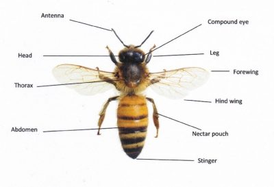 Bee with Labels